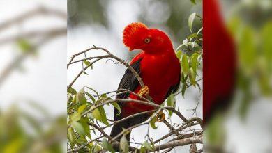 Photo of Una expedición confirma que la mayor biodiversidad del mundo está en Bolivia