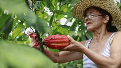 Photo of Cacaocultores invierten RD$1,200 millones en planta procesadora