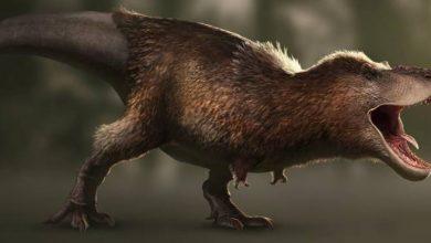 Photo of Las aves terrestres lograron sobrevivir a la extinción de los dinosaurios