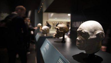Photo of Confirman la antigüedad del Homo antecessor: entre 772.000 y 949.000 años