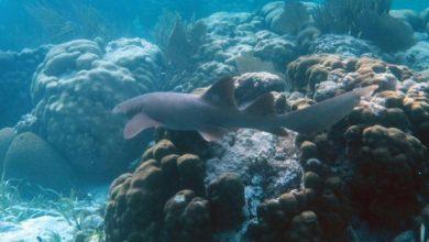 Photo of Retiran el arrecife de barrera de Belice de la Lista de Patrimonio en Peligro
