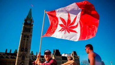 Photo of La ONU critica a Canadá por la legalización del uso recreativo del cannabis