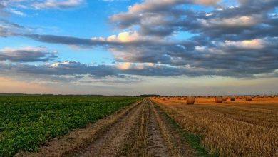 Photo of EEUU lanza plan de US$12,000 millones para compensar a agricultores