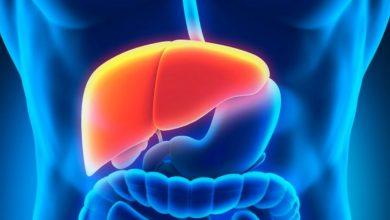 Photo of Identifican proteína para el correcto funcionamiento del Hígado