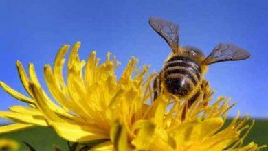 Photo of El polen de las flores sirve de herramienta científica para conocer el pasado