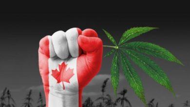 Photo of Tras su legalización, Canadá sufre de escasez de marihuana