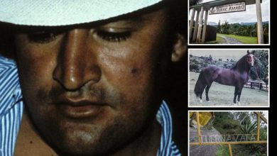Photo of El narcotraficante que pagó un millón de dólares por un caballo