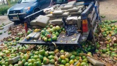 Photo of Una destartalada camioneta cargada de mangos llevaba droga en Barahona.