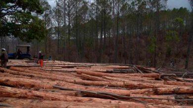 Photo of Hombre camina 800 km de espaldas para salvar un bosque.