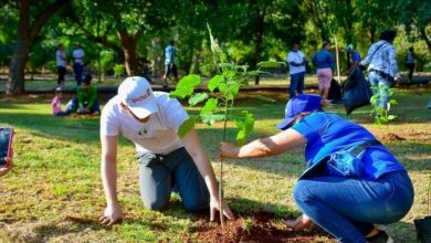Photo of ADN realiza jornada de arborización en zonas del Distrito Nacional.